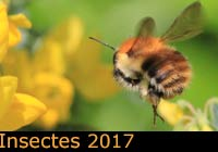 Insectes 2017